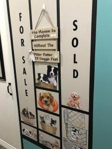 Pet Shop 5